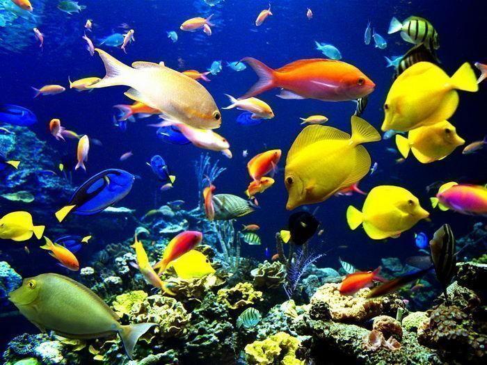 Fond ecran poisson page 18 for Poissons exotiques aquarium
