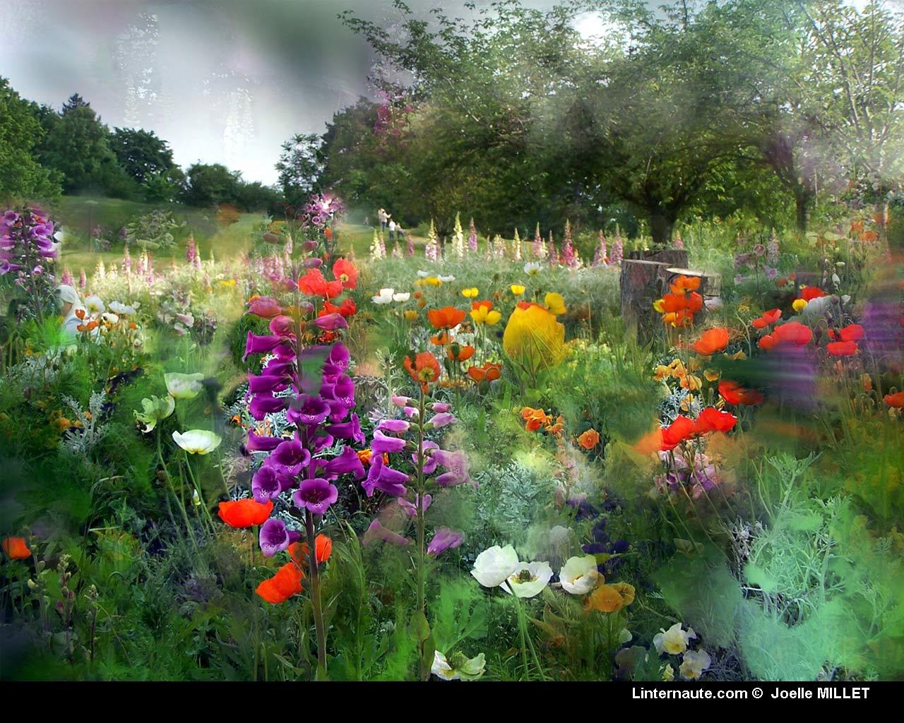 Fond ecran fleurs page 15 for Photo d ecran gratuit