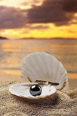 coquillage perle