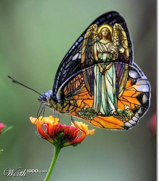 Transmutation..... à la recherche de la paix intérieure ..... ( 4 ) - Page 15 3bfe0260