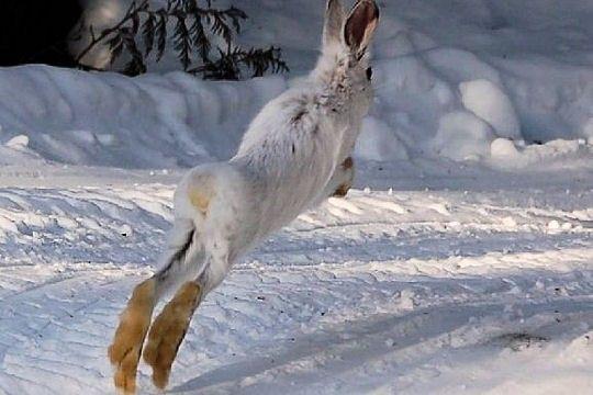 Fond ecran animaux montagne page 8 for Fond ecran hiver animaux