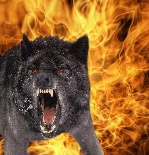 Le loup for Le jardin qui bouge