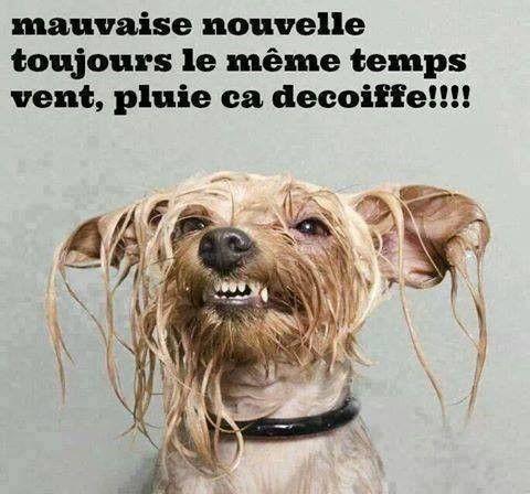 Animaux rigolos - Animaux humoristiques ...