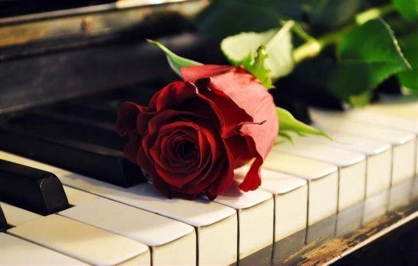 Роза на клавишах - Музыка Под старину Обои на рабочий стол.