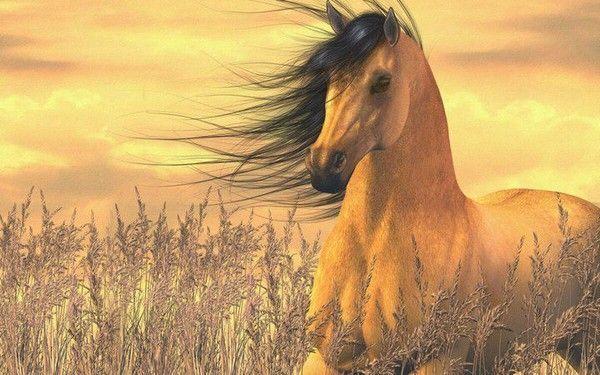 fond d'ecran 3d chevaux