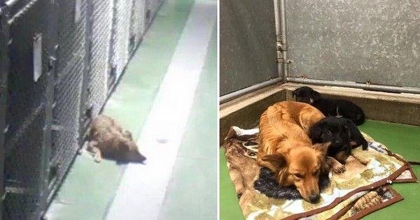 Un chien se glisse hors de sa cage