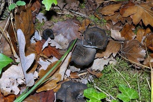 Les champignons  - Page 2 Dfb60ba7