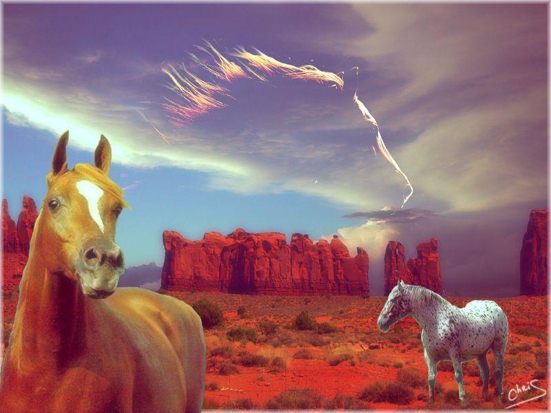 Fond ecran chevaux page 15 for Fond ecran 3d gratuit