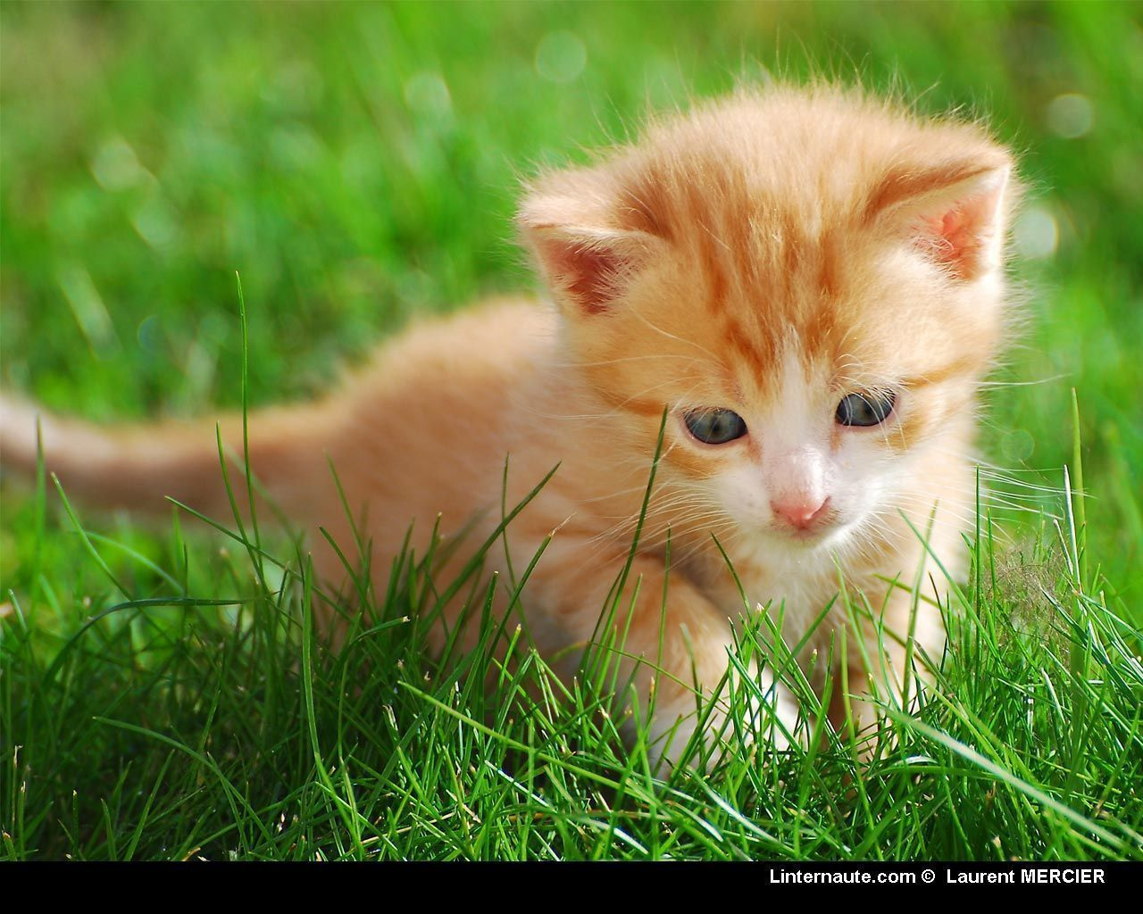 Fond ecran chat page 13 - Wallpaper animaux ...