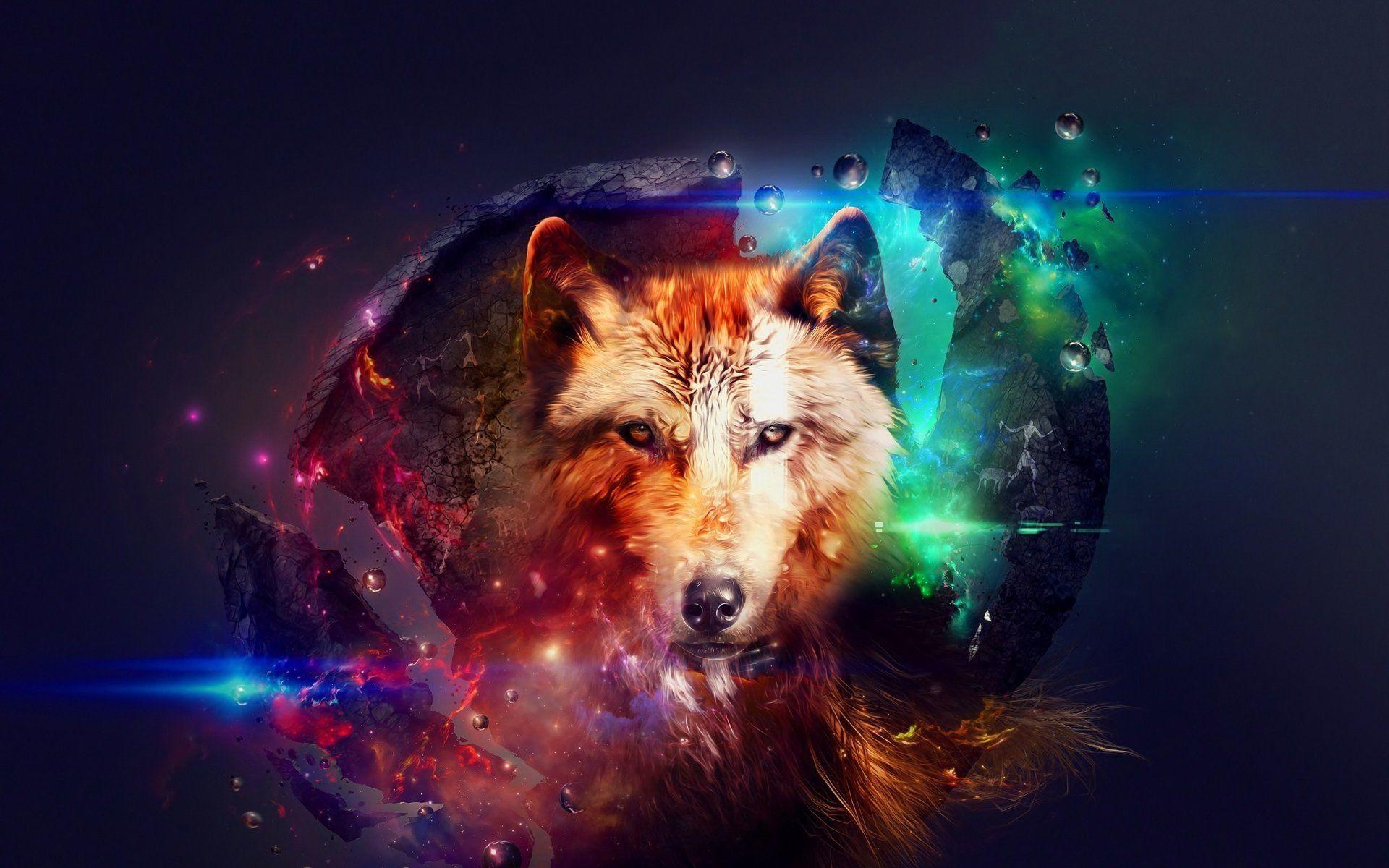 fond ecran loup