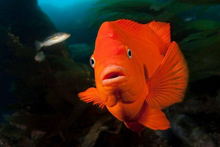 Animaux de la marre et d eau douce for Marre a poisson