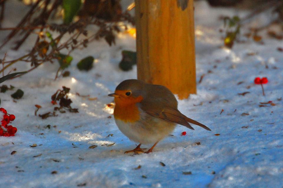Fond ecran oiseaux page 30 for Fond ecran hiver animaux