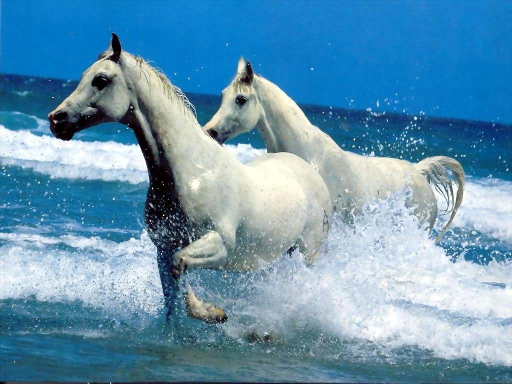 Fond ecran chevaux page 15 for Ecran photo